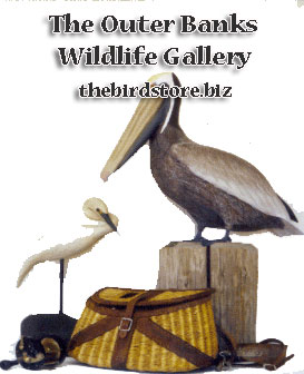 Outer Banks Wildlife Bird Store Gallery