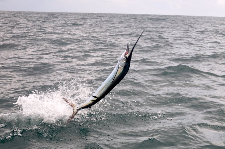 Mexico Sailfishing with Captain Charles Foreman on the Country Girl Charters