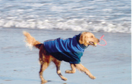 dogs_beach_md