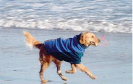 dogs_beach_md
