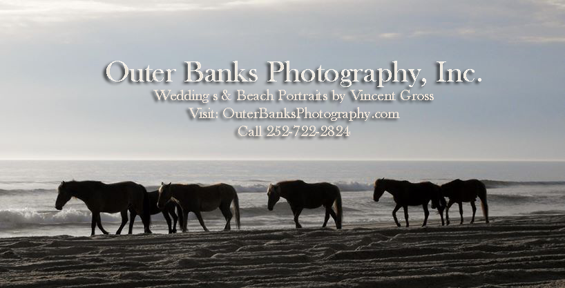 Corolla Horses Photography Vincent Gross