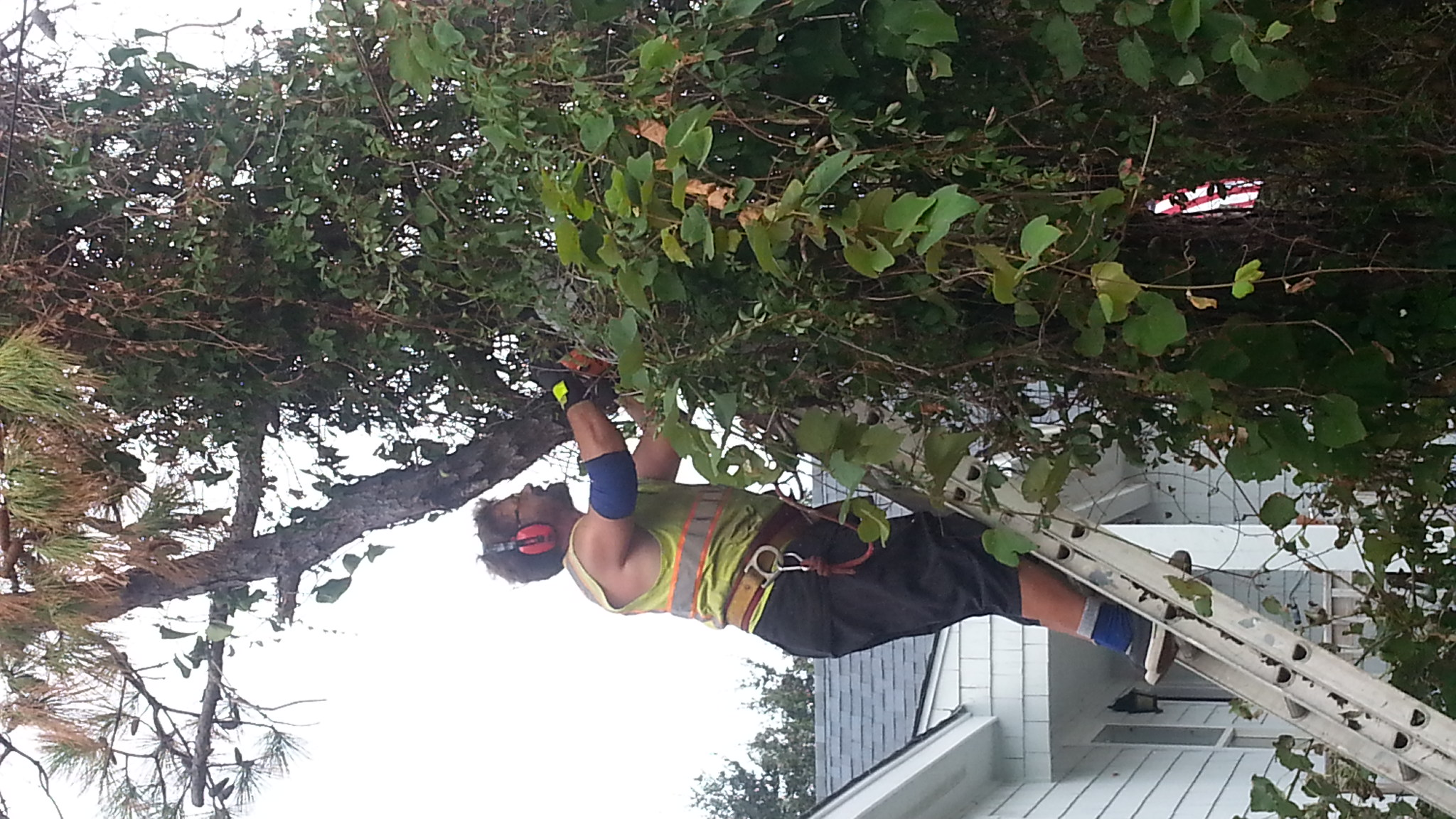 Johnnie on the Spot Your Outer Banks Tree Service Expert!