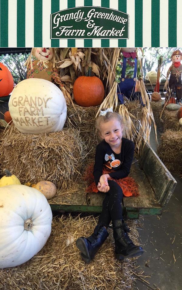 Grandy Farm Market, pumpkin patch hayrides, peaches, jams